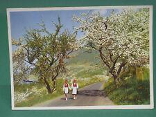AK Norway orchards in Hardanger in full bloom-molto vecchia cartolina