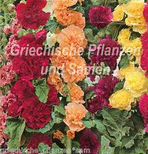 Stockrose Mauve rempli Blüten mélange multicolore 25 Graines