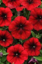 Petunia Seeds Tidal Wave Red Velour 25 Pelleted Seeds FLOWER SEEDS