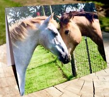 Blank note cards with envelopes Horses & Hearts - Greeting Set of 8