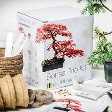 Bonsai Seed Kit 3 Tree Type Starter Grow Your Own Box Gift Plant Theatre