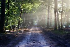 DIGITAL PHOTOGRAPH NATURE FOREST WALLPAPER/IMAGE COMMERCIAL USE LANDSCAPE PHOTO