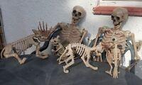 Halloween 5ft giant life size poseable skeleton + dog ,cat ,bird, rat