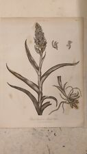 Orchis: Plate II: Encyclopaedia Londinensis V.17
