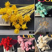 30 Pcs Bridal Wedding Flower Arrange Dried Flowers Home Garden Decor Craft Gifts
