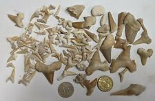 Collection of 40 Million Year old Fossil SHARK TEETH From Morocco Lot (#U323)