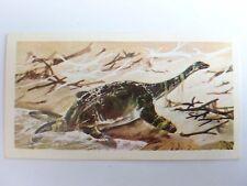 Brooke Bond Prehistoric Animals tea card 34. Cryptoclidus. Plesiosaur, Dinosaur.