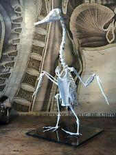Vintage DUCK SKELETON anatomy TAXIDERMY education veterinary school bones BIRD