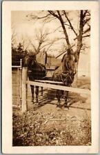 Vintage RPPC Photo Postcard Farm Scene / Horses in Pen w/ Harness c1920s Unused