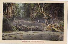 K 42 - Kamerun - Wegbau im Urwald, ungelaufen