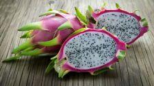 100Pcs Hylocereus Dragon Fruit Seeds PITAYA  Costaricensis Polyrhizus Cactus