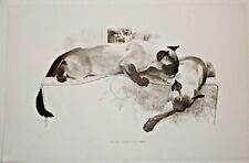 Siamese Cats Sepia Art Print by Robert Kuhn c: 1960s