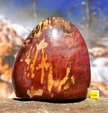 More details for arizona rainbow petrified fossilised wood polished freeform - 1234g