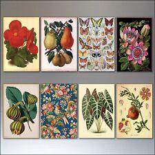 Victorien Botanique Illustrations Décorative Aimants pour Réfrigérateur