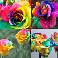 Magical Multi-color Rainbow Rose Flower Seeds Garden Plants Seeds Flower Seeds