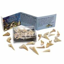 Sharks Teeth Pack Boxed