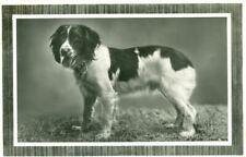 New ListingRare Real Photo Springer Spaniel Dog Postcard Pc Netherlands c1934