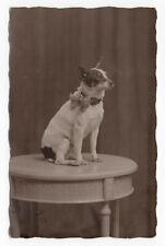 PHOTO CARTE ANCIENNE Petit Chien Noeud Portrait Studio Vers 1920 Table Collier