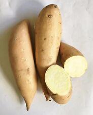 16oz Fresh Sweet Potato, White Cream Colored Flesh
