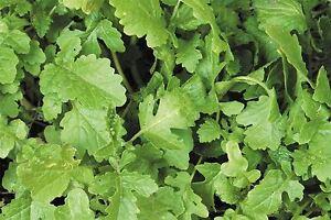 Green Manure - White Mustard Seed - 100g