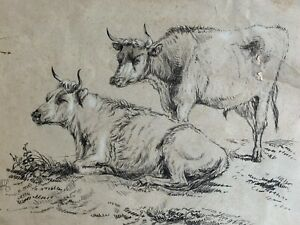 Circle of Thomas Sidney Cooper 1803-1903 cattle charcoal drawing