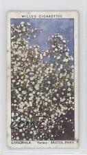 1939 Wills Garden Flowers by Richard Sudell #23 Gypsophila Non-Sports Card 1i3