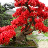 Red Japanese Cherry Plant Courtyard Garden Bonsai Tree Small Sakura 10 PCS Seeds