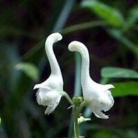 100Pc Netter Schwan Blumen Samen Seltene Blumen-Pflanzen-Samen Weiße Blume K7S3