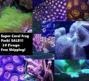 Super Coral Pack 10 Frags (Easy, Polyps,Leathers, Zoanthids, torches, Saltwater)