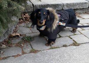 Genuine Canada Pooch North Pole Hooded Parka Waterproof Black Size 14 Puppy/Dog