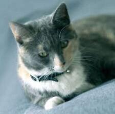 Cat Collar Bioflow Pet Therapy Bracelet Magnet Arthritis Dog Kitten Lead Caravan