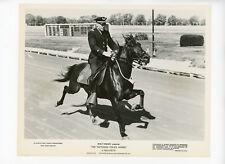TATTOOED POLICE HORSE Original Movie Still 8x10 Disney Sandy Sanders 1964 2206