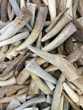 10 Pounds Of Deer and Elk Antler Tips-Great For Jewelry, Crafts, Grinding, Etc.