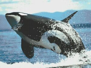 ORCA JUMP - counted cross stitch chart