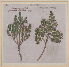 1568 MATTHIOLI MATTIOLI BOTANICA PASSERINA SANAMUNDA