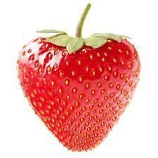 Strawberry Powder 2lb Brazilian Freeze Dried PURO SUPERFOODS Vitamin C Antioxid