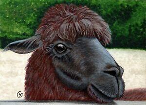 ACEO Alpaca Brown ATC Mixed Media Painting ORIGINAL Art Sherry Goeben