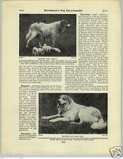 1930 Book Plate Dog Print Pyrenees Pyrenean Paris Mountain Sheepherding
