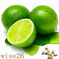 Thai Organic Key Lime Aurantifolia Seeds Citrus Lemon  20PCS Seeds Fruit Seeds