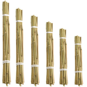 Large Thick Strong Bamboo Canes Fencing Wood Trellis Garden Stakes Plant Wooden