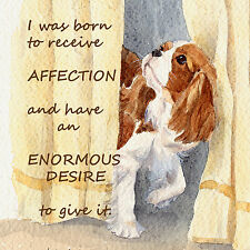 CAVALIER KING CHARLES SPANIEL DOG BLENHEIM CURTAIN CALL WATERCOLOUR PRINT PLAQUE
