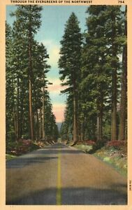 Vintage Postcard 1930's Through The Evergreens of the Northwest Trees
