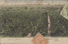 PARAGUAY BOSQUE DE BANANAS ED. GRUTTER 1905-06