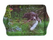 SPRINGER SPANIEL PUPPY WITH FEATHER IN MOUTH TRINKET TRAY 21CM X 14CM