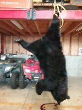 2020 Spring Black Bear Hunt- New Brunswick Canada
