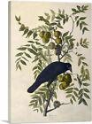 ARTCANVAS American Crow Canvas Art Print by John James Audubon