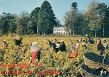 BOURGOGNE château de Pommard proprio J.-L. Laplanche vendanges vin