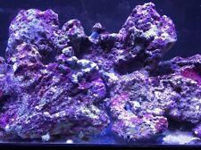 New listing 40 pounds of live rock fiji pukani tonga etc coral saltwater fish tank Nr