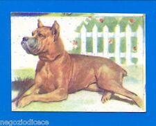 ANIMALI - Lampo 1964 - Figurina-Sticker n. 58 - BOXER -New