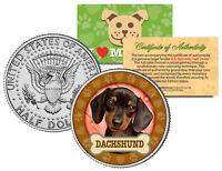DACHSHUND Dog JFK Kennedy Half Dollar US Colorized Coin